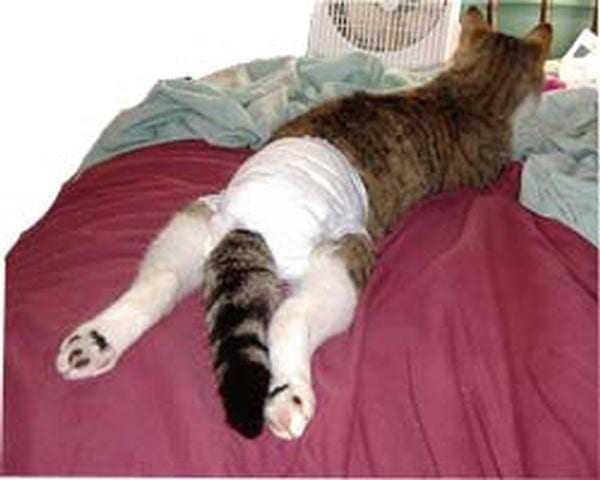 DISPOSABLE CAT DIAPERS, Planet Urine