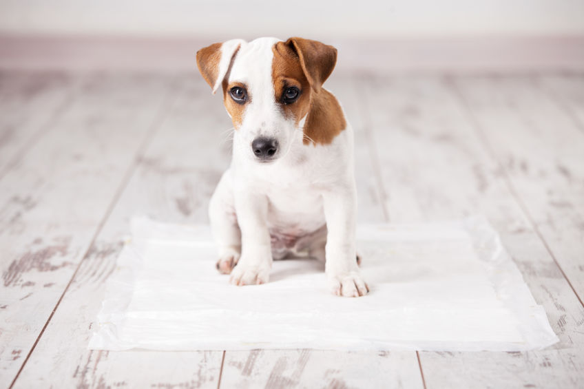puppy training - keep carpet and hard wood floors clean with urine out powder