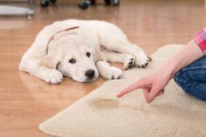 use urine out products to get rid of pet urine