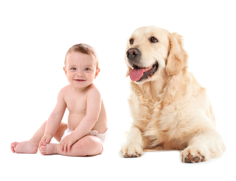 Why Your Pets, and Not Just Babies, Can Benefit from Diapers, Planet Urine