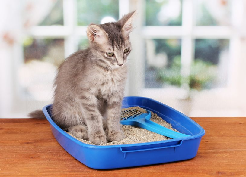 Quarantine Kitten Creating A Mess Around Your House? Here's What to Do, Planet Urine