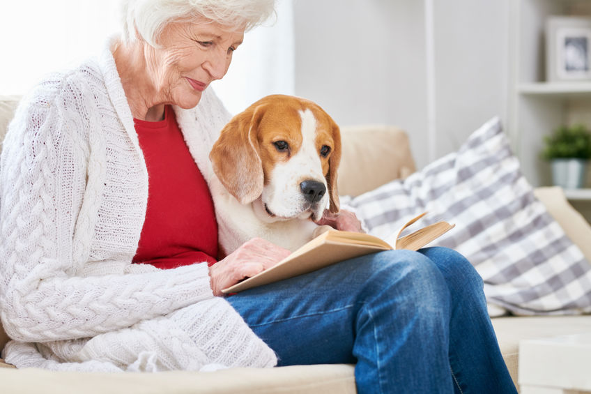 Why Do Older Dogs Live Longer with Dog Diapers?, Planet Urine