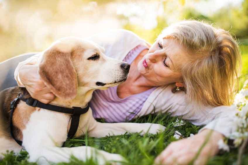 How to Make Life Easier for Elderly Dogs, Planet Urine