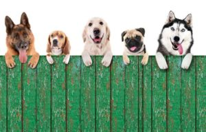 dogs on a fence