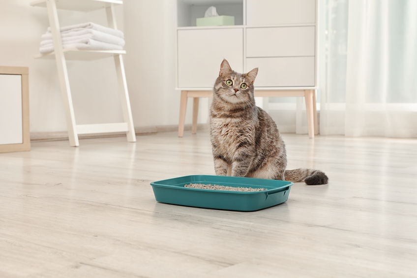 Why Do Some Cats Get in the Habit of Peeing on Hardwood Floors?, Planet Urine