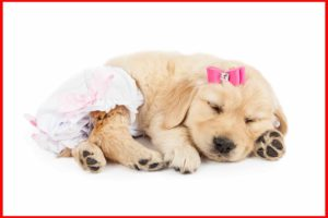 puppy with diapers sleeping