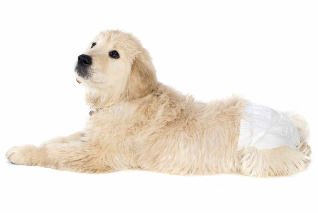 DISPOSABLE DOG DIAPERS, Planet Urine